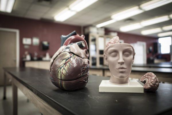 Master of Science in anatomy at Alderson Broaddus University