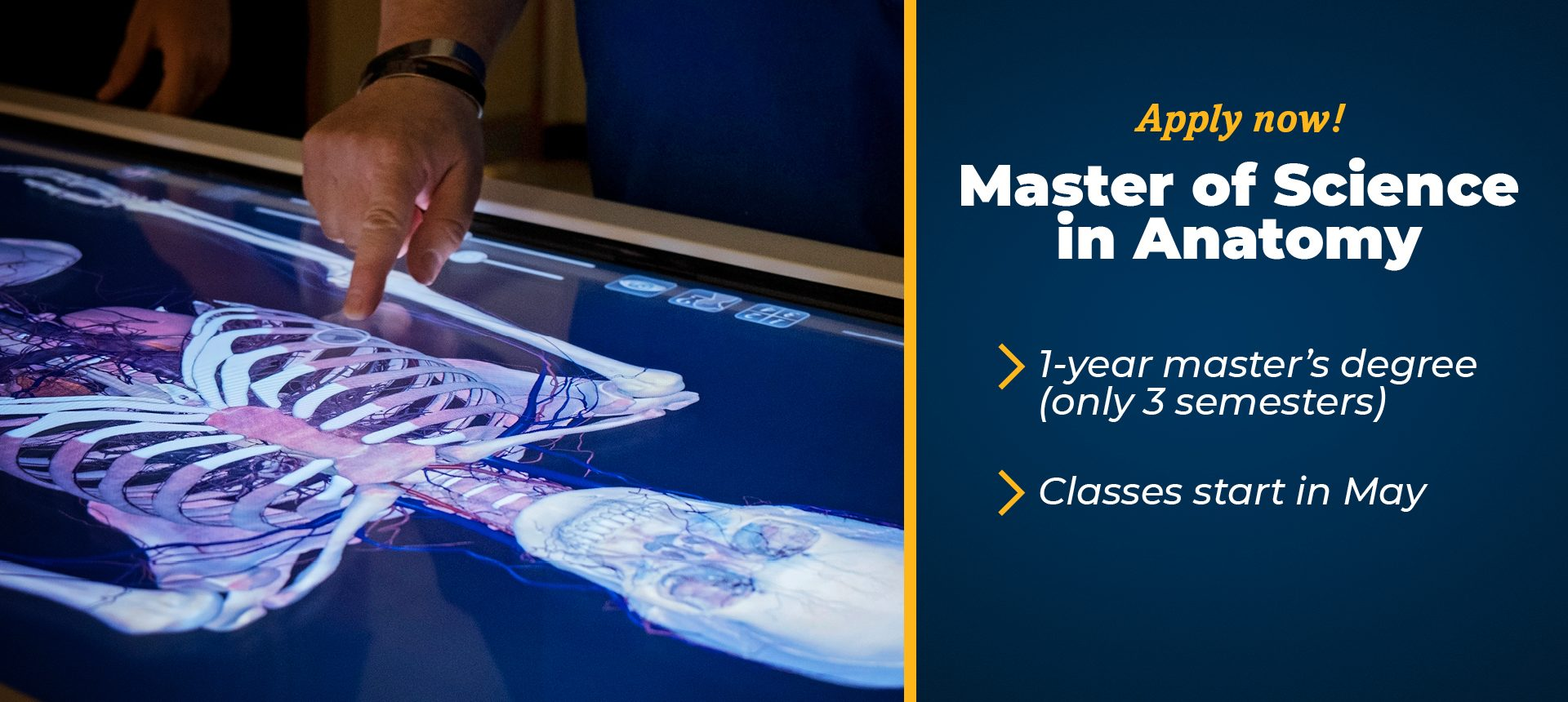 AB Masters of Science in Anatomy